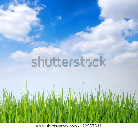 green grass, the blue sky and white clouds - stock photo