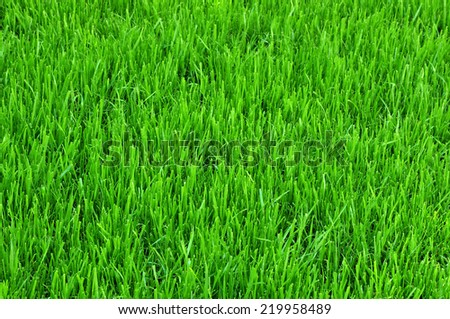 Green grass turf background texture. - stock photo