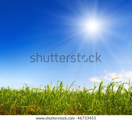 green grass under blue sky background - stock photo