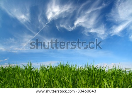 green grass under blue sky with fleecy clouds