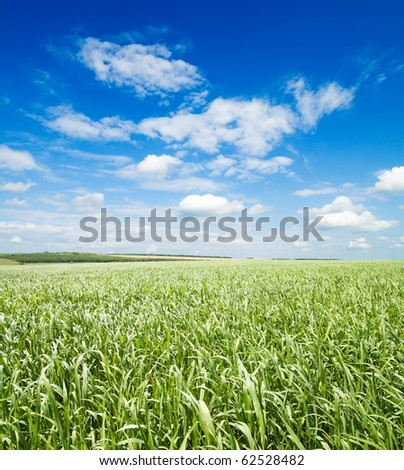 green grass under cloudy sky - stock photo
