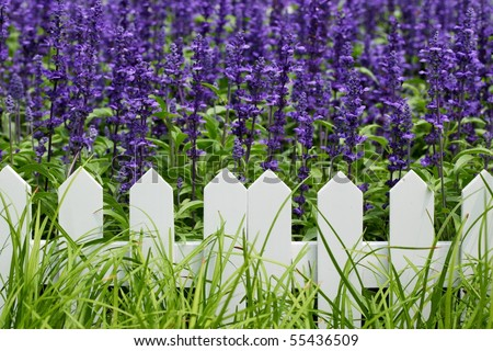 Green grass,white fence,purple flowers for use as background. - stock photo