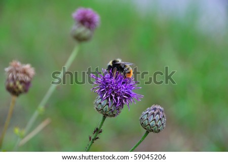 Green grass with bee sitting on flower