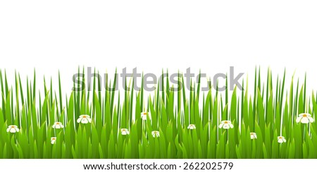 Green grass with blooming chamomiles isolated on white background. Nature. Spring.  - stock photo