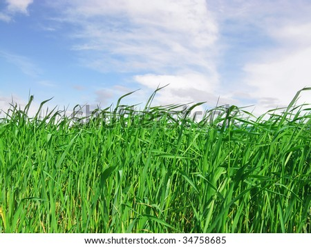 Green Grass with Blue Sky - stock photo