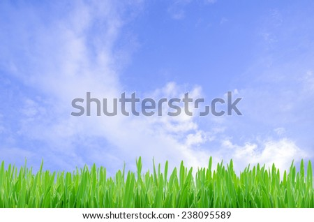 Green grass with blue sky background  - stock photo