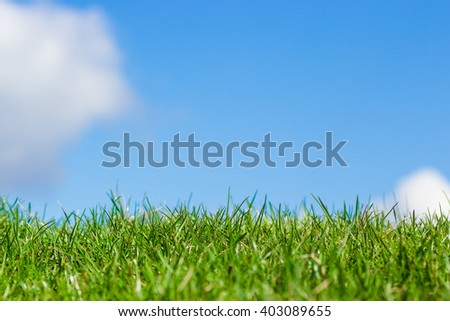 Green grass with blue sky background in a bright clear day with clouds close up macro detailed photo on a sunny morning day - stock photo