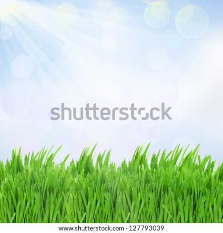 green grass with blue sky  in sunny day - stock photo