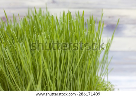 Green grass with blue wooden background - stock photo