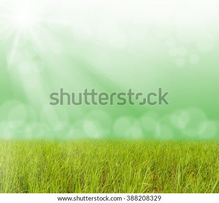 Green grass with blurred bokeh light and sun ray, Can be used for display or montage your products
