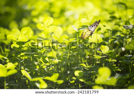 Green Grass with Butterfly - stock photo