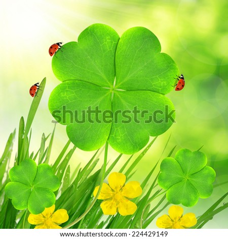 Green grass with clover leaf and ladybugs - stock photo