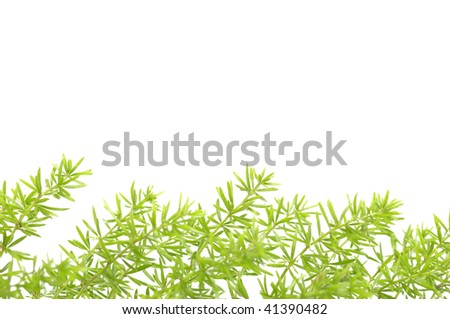 green grass with copy space