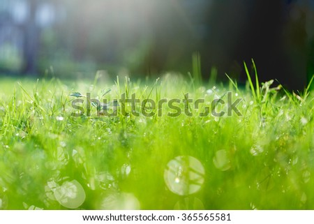 green grass with dew and a lot of light glare.
