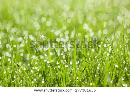 green grass with dew drops - stock photo
