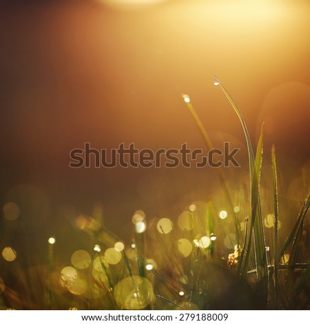 green grass with dew drops in rain field. Nature fresh outdoor background