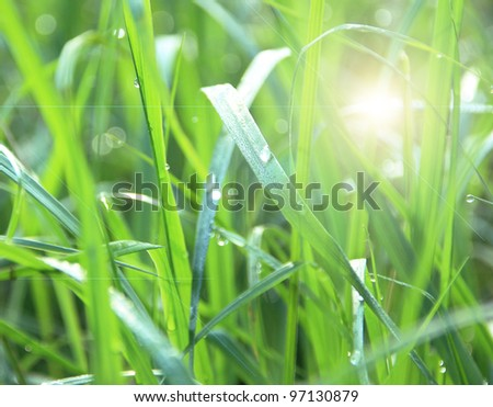 green grass with dew highlights