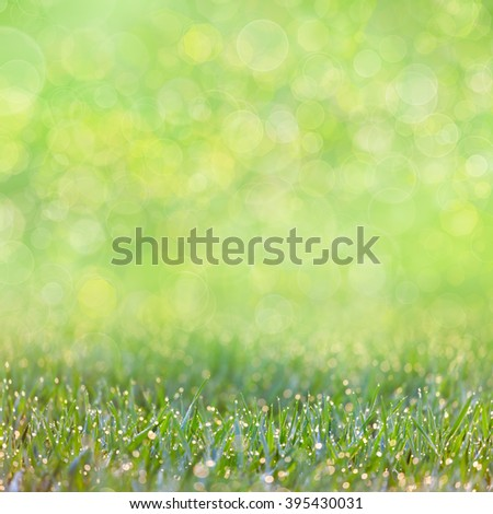 Green Grass with drops of dew -  defocused bokeh background, focus on the front grass