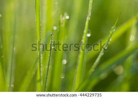Green grass with drops of dew in the morning. Green fresh and warm nature background. Macro image with small depth of field. - stock photo