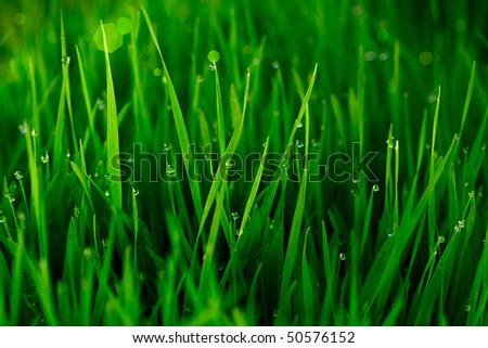 Green Grass With Early Morning Dew Drops ~ Bokeh In Background - stock photo