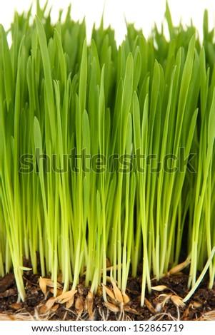 Green grass with fertile soil closeup - stock photo