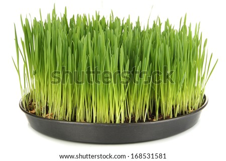 Green grass with fertile soil isolated on white - stock photo