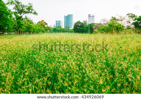 Green grass with flower field background, Surface green nature