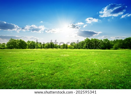 Green grass with flowers and trees in spring - stock photo