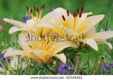 Green grass with lillies in summer day. - stock photo