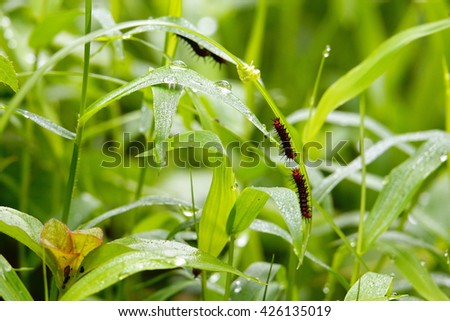Green grass with rain drop:Close up,select focus with shallow depth of field:ideal use for background. - stock photo