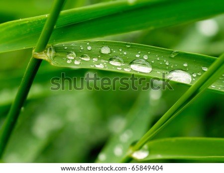 Green grass with raindrops - stock photo