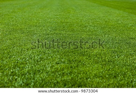 Green grass with shallow depth of field in a soccer field - stock photo