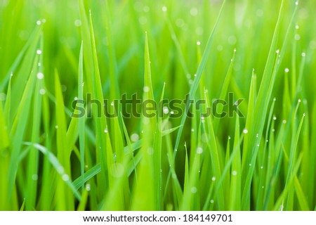 Green grass with small water drops texture - stock photo