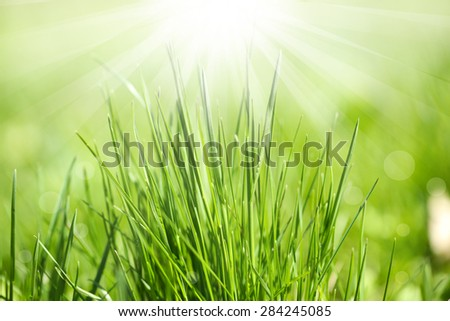 Green grass with sun rays, close up