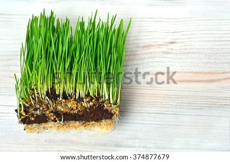 Green grass with turf isolated on white - stock photo
