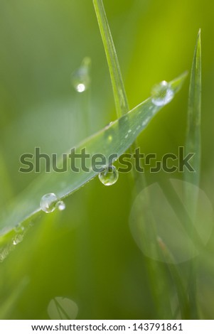 Green grass with water drop