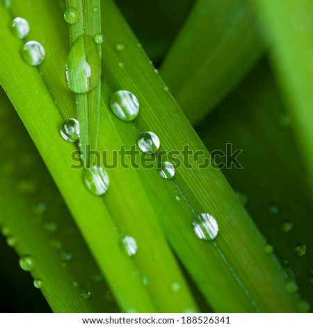 GREEN GRASS WITH WATER DROPS - stock photo