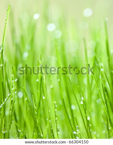 Green grass with water drops background - stock photo