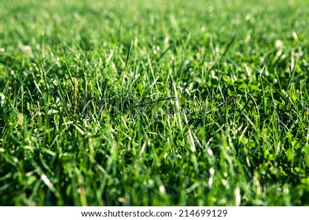 Green grass with water drops, close-up. Natural background - stock photo
