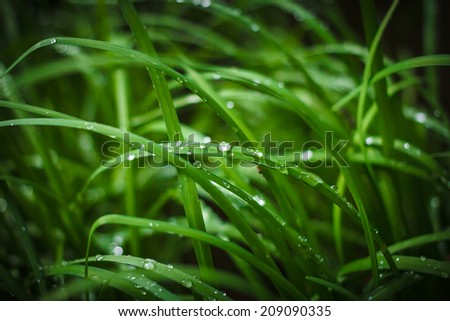 Green grass with water drops for background images. - stock photo