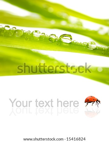 Green grass with water drops on it isolated on white background - stock photo