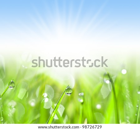 Green grass with water drops, summer background, Close-up - stock photo