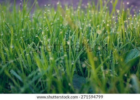 green grass with waterdrop - stock photo