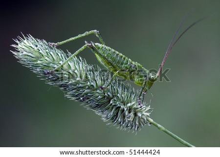 Green grasshopper on a green bent in green background - stock photo
