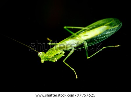 green grasshopper on glass window in the night time