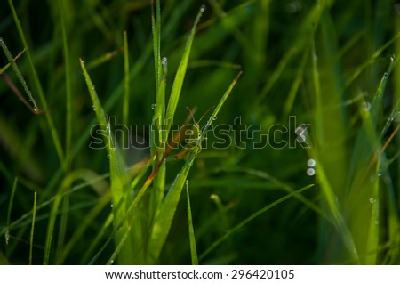 Green grasshopper on grass. Beautiful nature background with shallow depth of field - stock photo