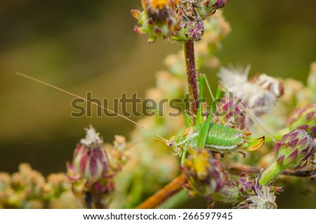 Green grasshopper posing for on flowers in the garden - stock photo