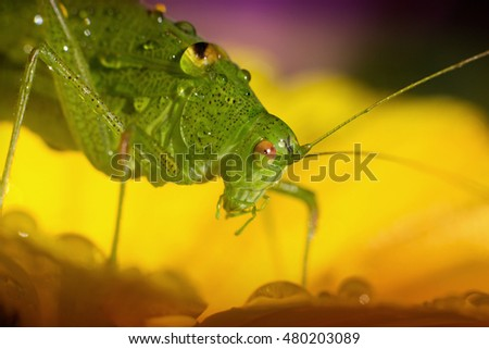 green grasshopper resting on a yellow flower