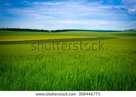 Green grassland and blue sky in summer. Classic Ukrainian landscape - stock photo