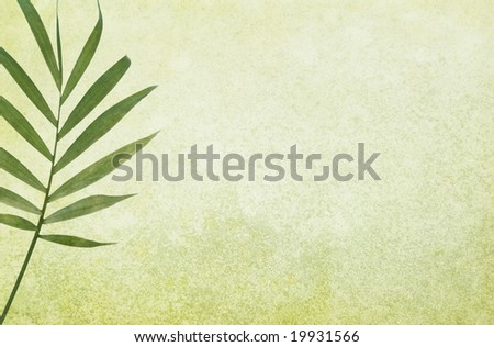 Green grunge background with palm leaf. Copy-space. - stock photo